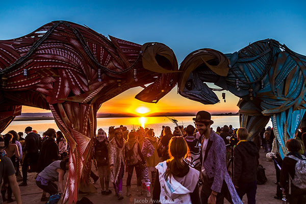 Symbiosis Gathering 2016 Art Installations